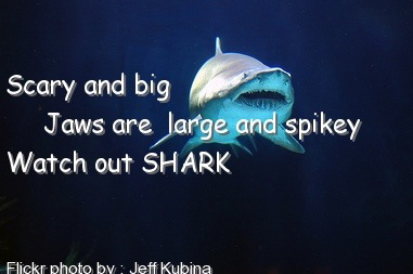 shark_touch_poem