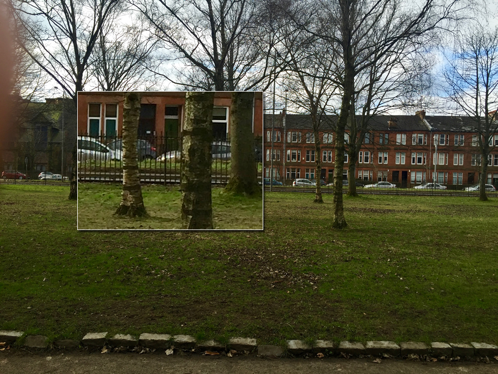 park trees, picture in picture of a close up