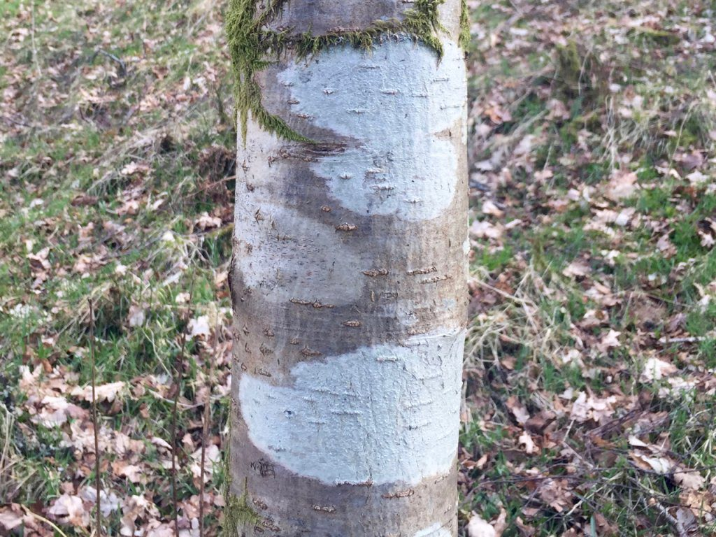 tree trunk and bark