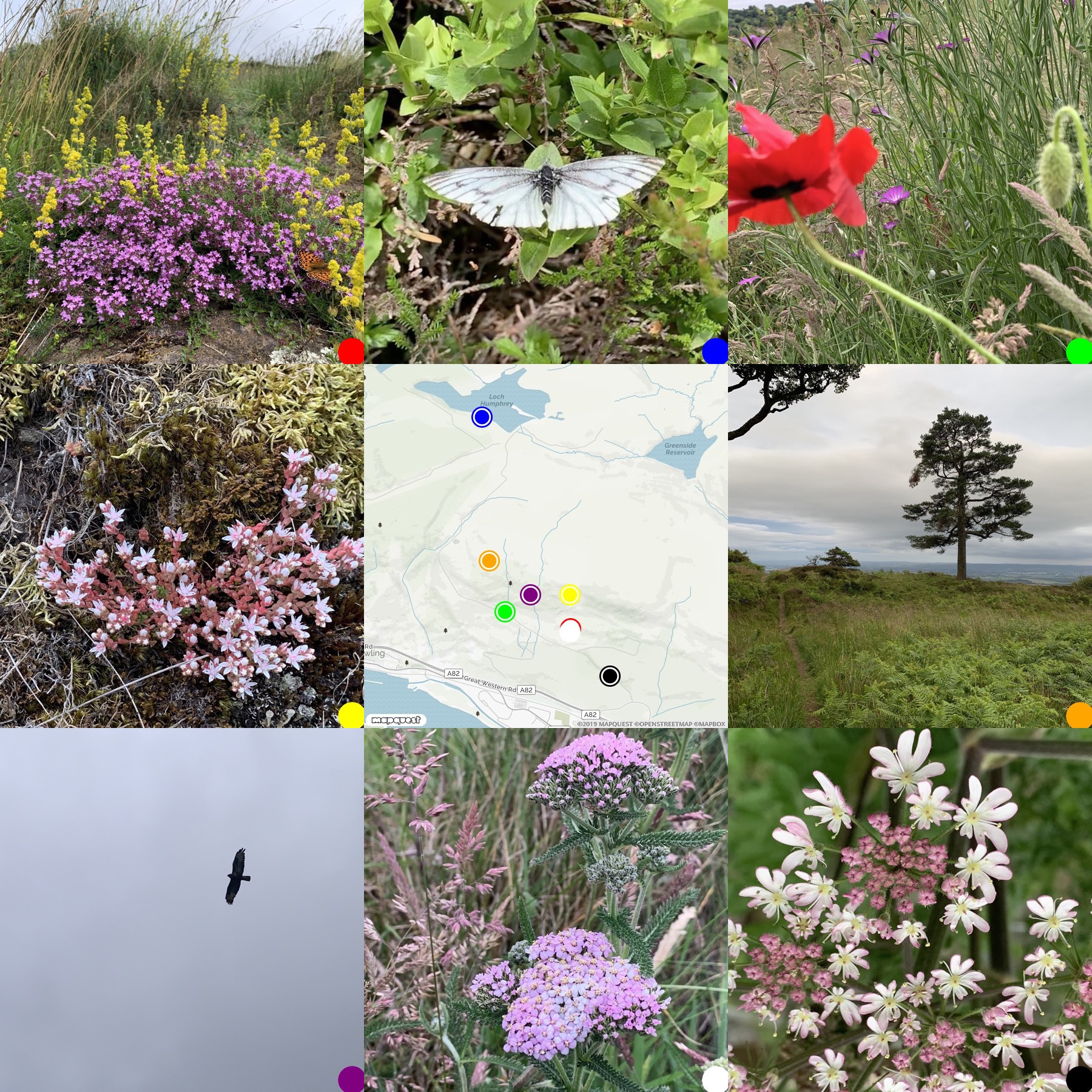 montage of 8 images surrounding a map, pictures of flowers and butterfiles, kilpatrick hills, scotland
