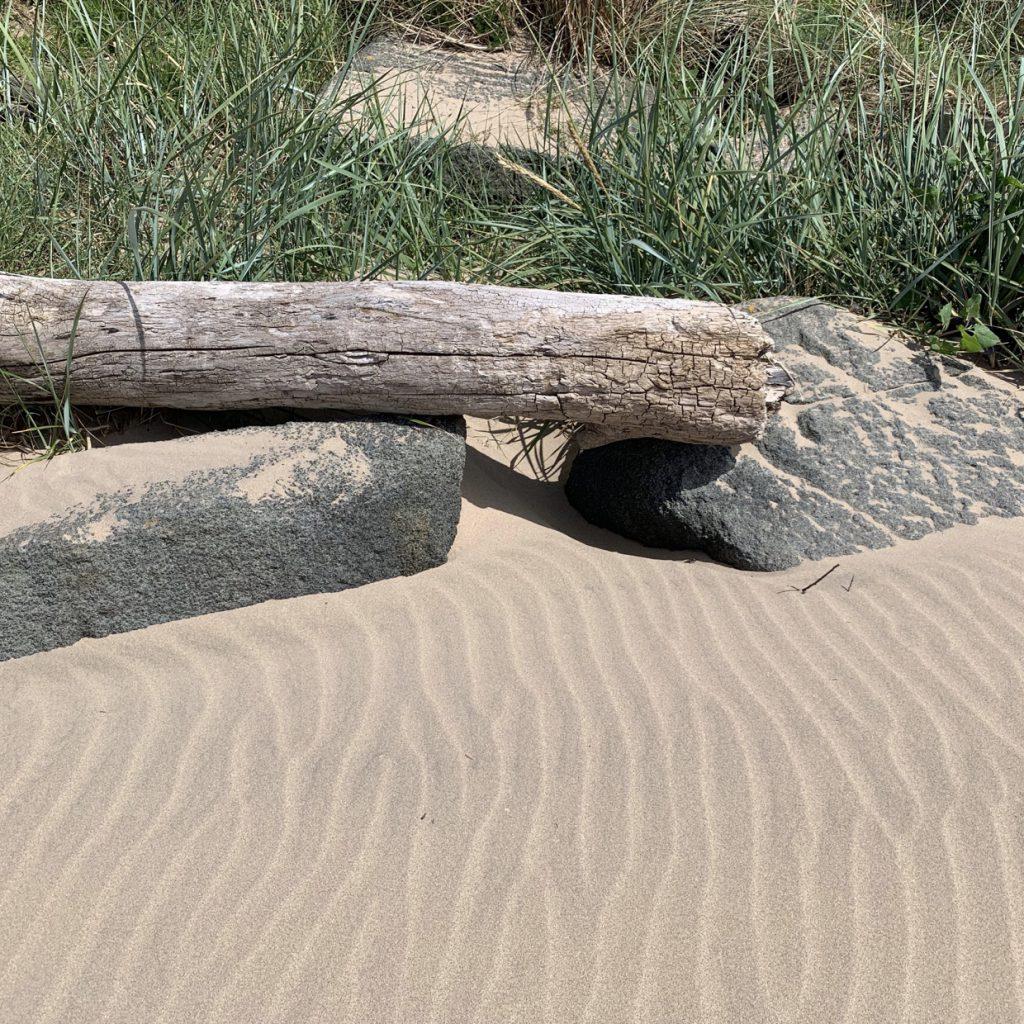 beach sand with drift wood