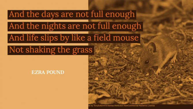 And the days are not full enough And the nights are not full enough And life slips by like a field mouse Not shaking the grass Ezra Pound