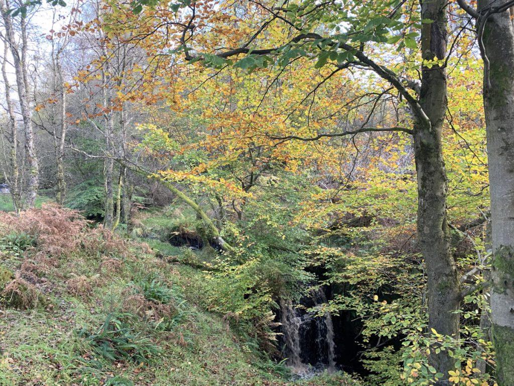 Ardinning Woods in October