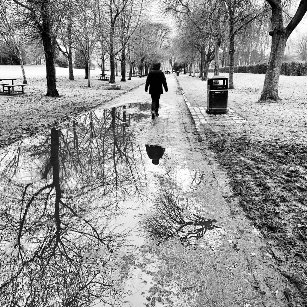 Puddles reflecting trees in the park. Mono.
