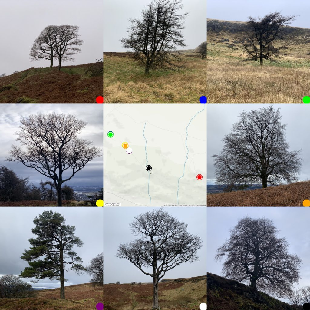 grid of 8 trees with map in the middle.