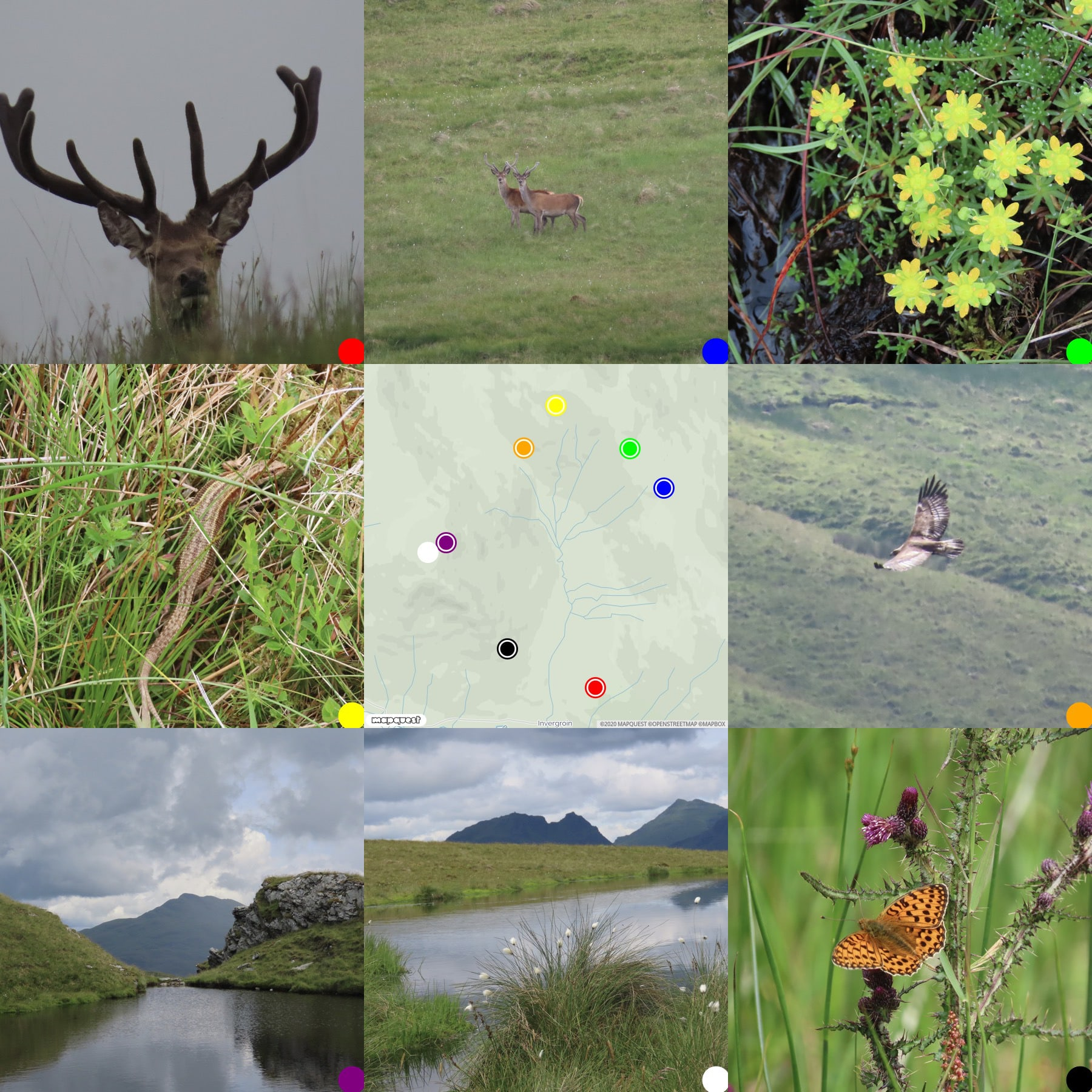 grid of photos around a map of Glen Douglas where they were taken. Read Deer, Sagifax, common lizard, eagle,hills and butterfly.