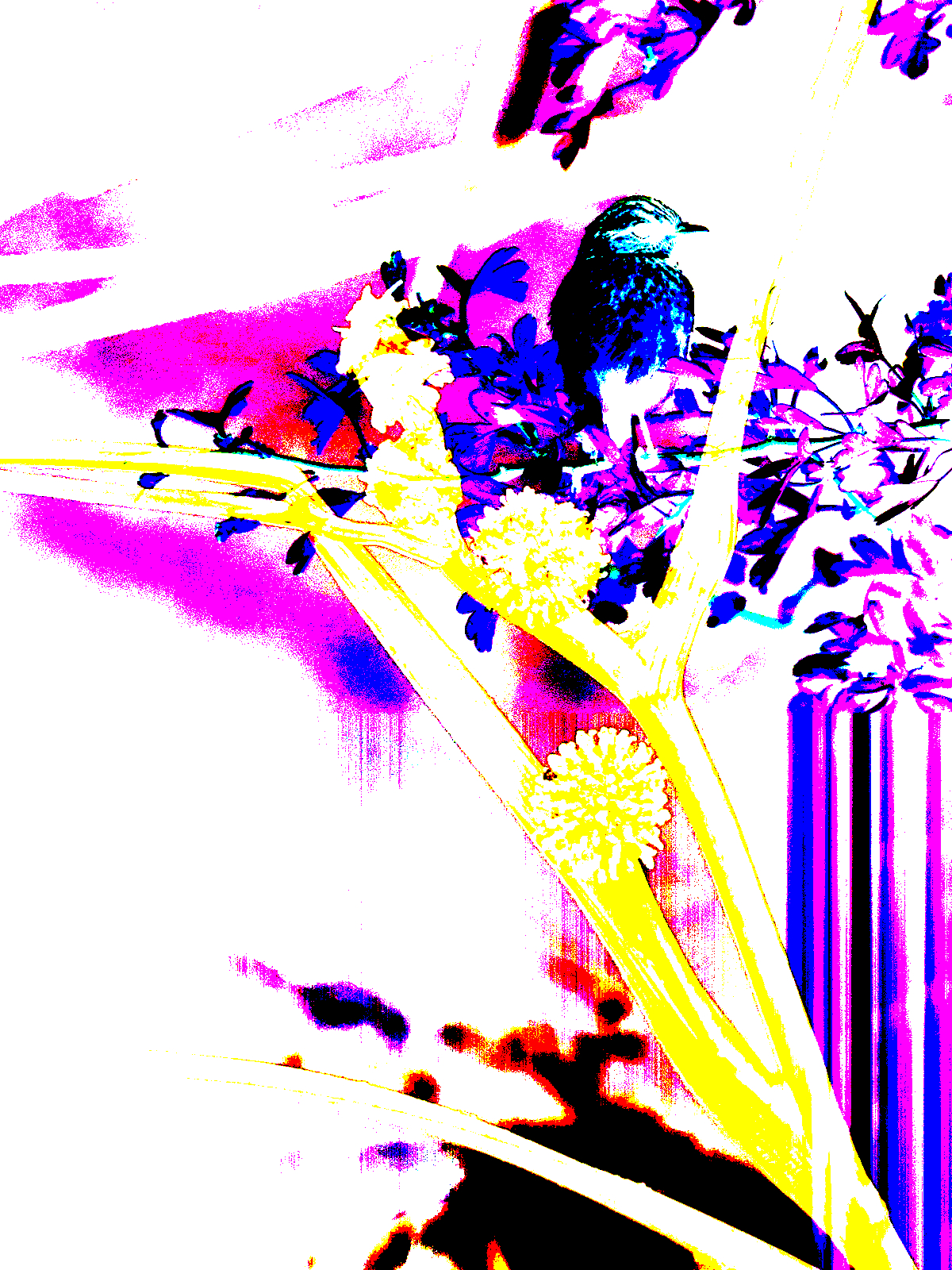 bird on a tree, layered image. pink, blue & yellow