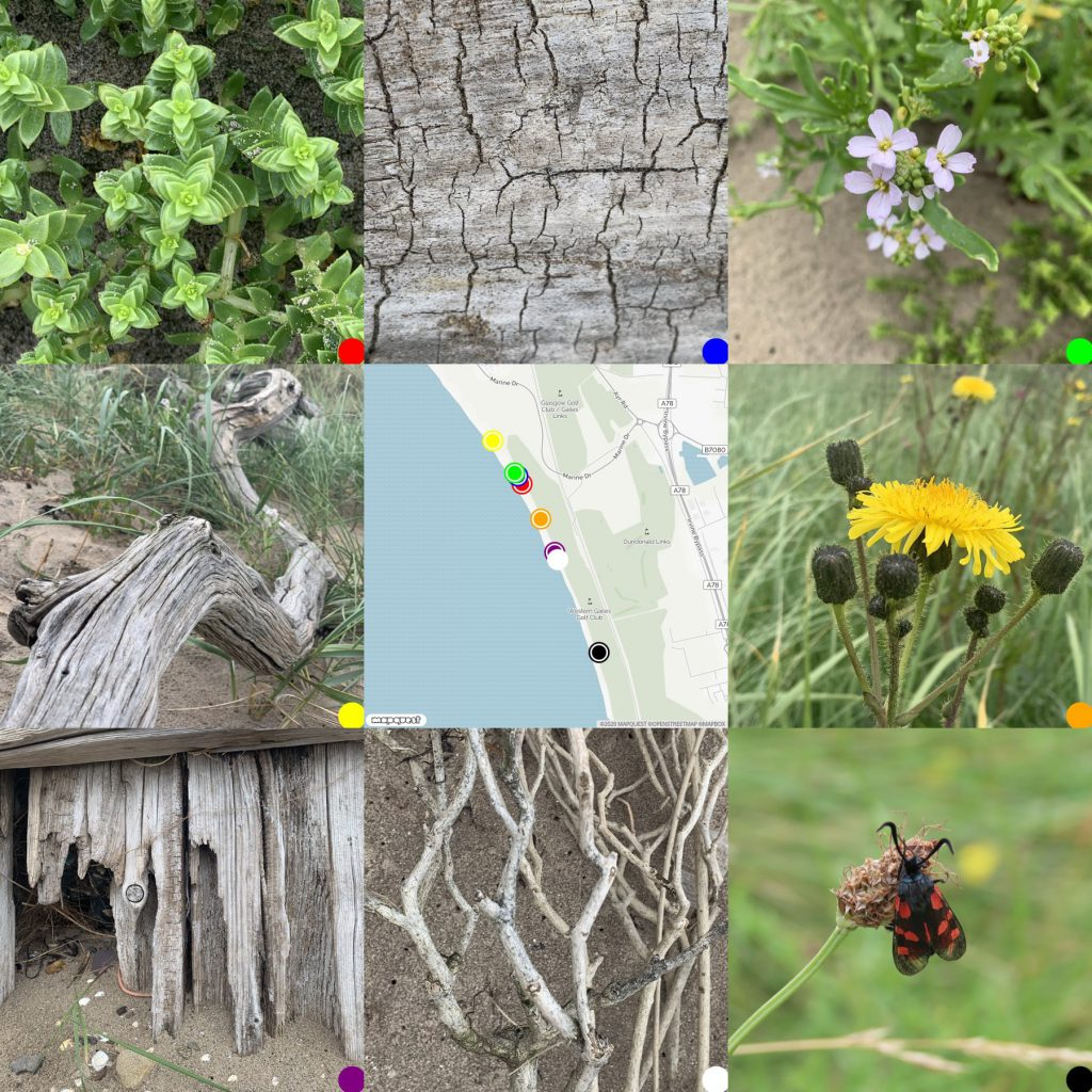 Photo grid with map of Barassie Beach, flora, insects, driftwood