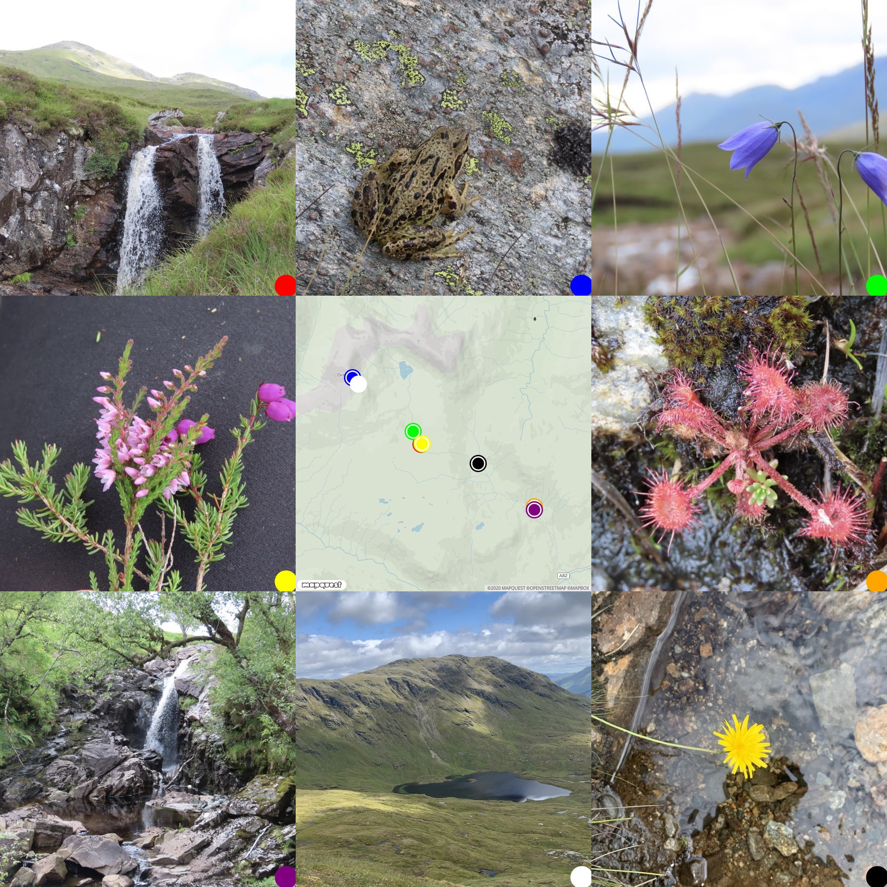 grid of 8 photos round a map, flora, fauna and view fro ma walk to Glen Oss