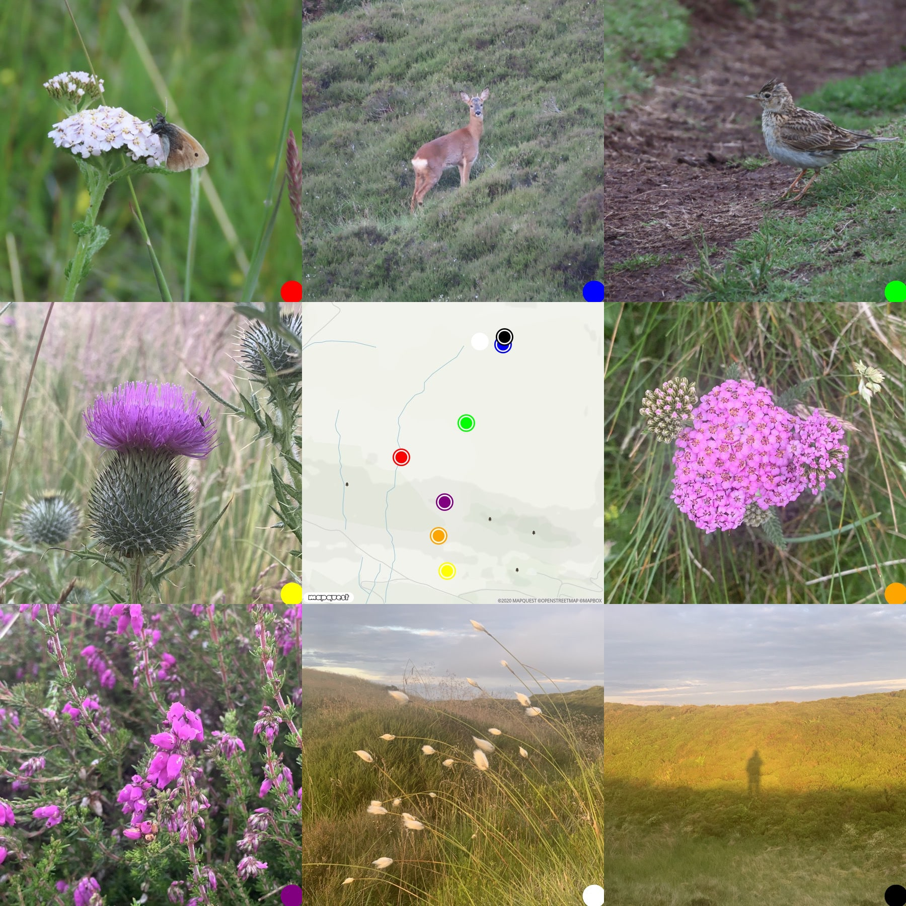 grid of 8 photos with a map in the middle. Flora and Fauna from Kilpatrick Braes