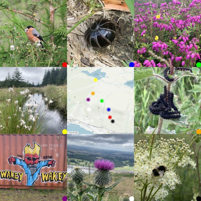 map surrounded by pictures taken on walk. Flora & Fauna
