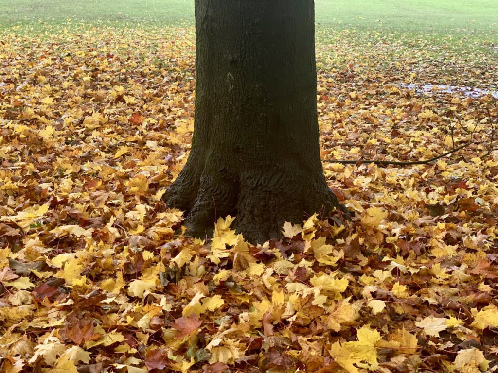 Tree trunk surrounded by leaves