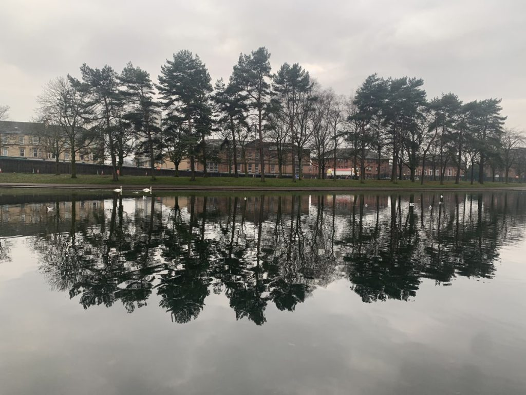Victoria Park Pond, Scots pines reflected