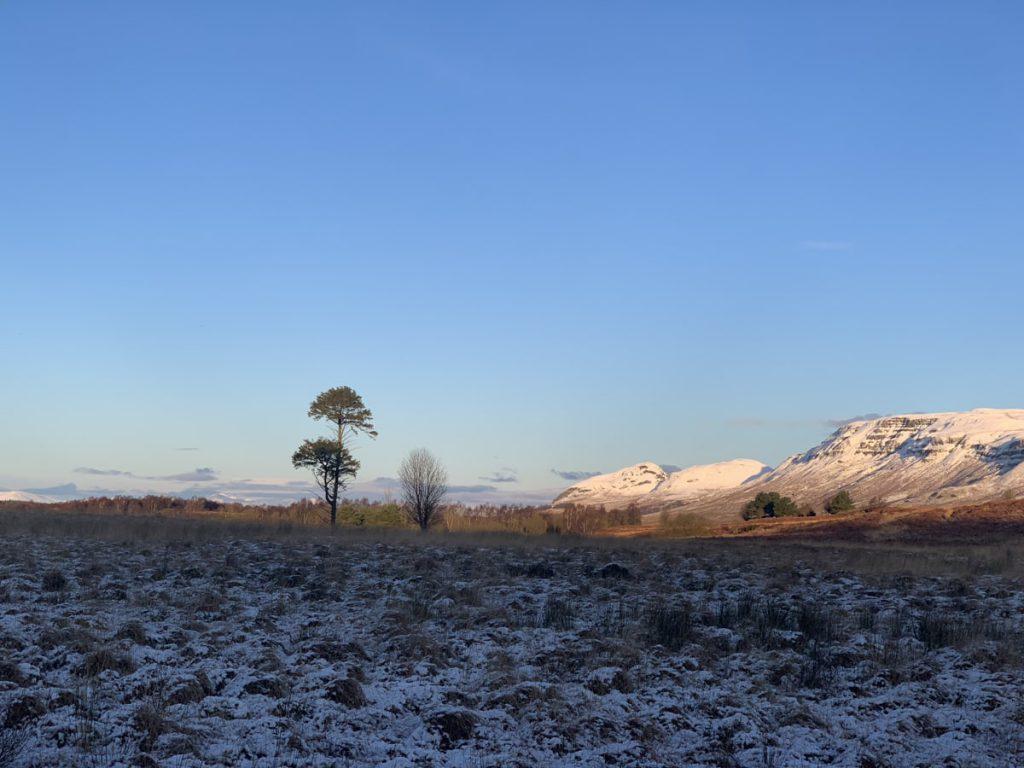 Ardinning View, scots pine, dungoyn behind
