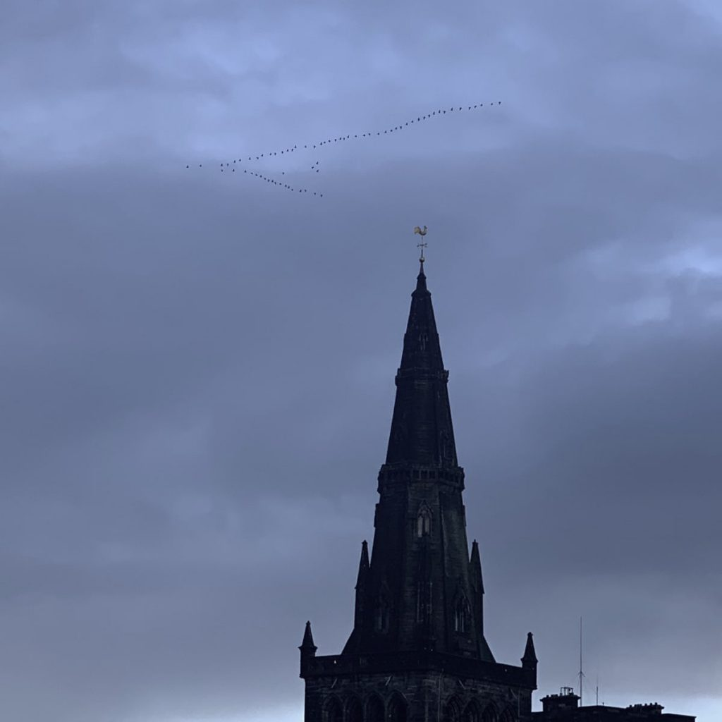 Geese over Glasgow Cathedral