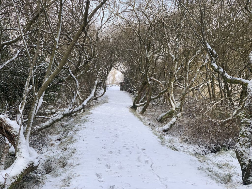 snowy path through trees