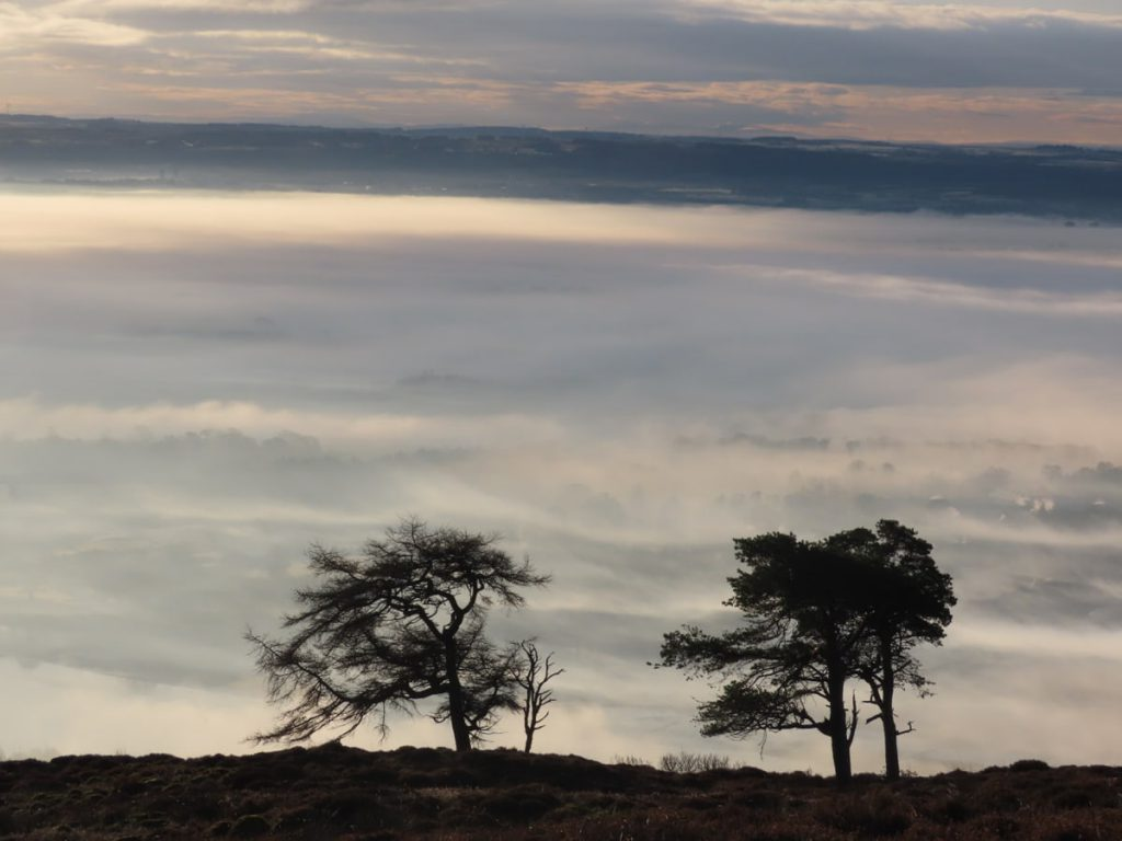 Trees above the clouds