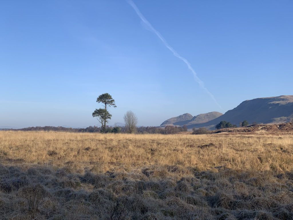 Ardinning Lone Pine