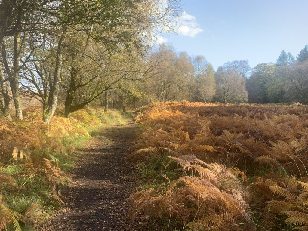 ardinning autumn path
